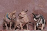 Three Sphinxes — Stock Photo