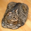 Partial  of a tabby cat — Foto Stock