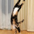 Cat is standing on its hind legs — Stock Photo