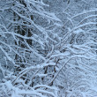 Snow on branches of trees — Stock Photo