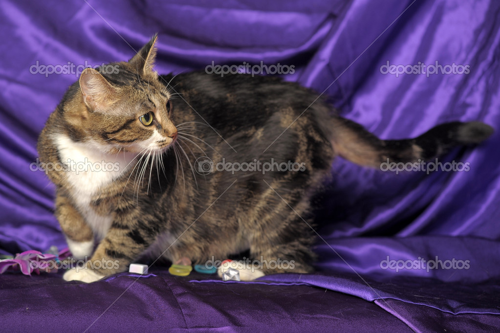 Beautiful cat  Stock Photo #8464766