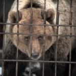 Sad and lonely bear — Stock Photo #8597654