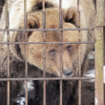 Sad and lonely bear — Stock Photo #8597668