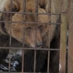 Sad and lonely bear — Stock Photo #8597671