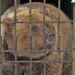 Sad and lonely bear — Stock Photo #8597678