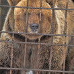 Sad and lonely bear — Stock Photo #8597690