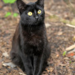 Black cat on the street - Stock Photo
