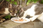 Homeless cats eat in the street — Stock Photo