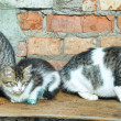 Three homeless cat — Stock Photo #9513087
