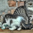 Homeless cats - Foto Stock