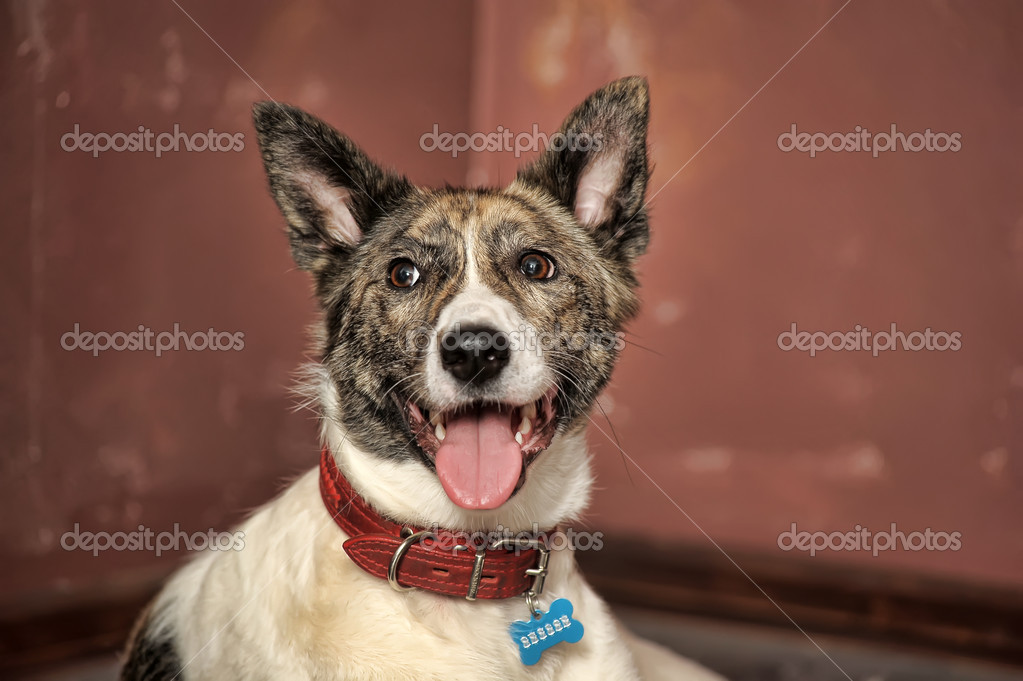 Dog portrait — Stock Photo #9960308