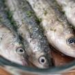 Sea fish-fish cooked-sushi-meditterranean fish - Stock Photo