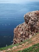 Red cliff of Helgoland — Stock Photo