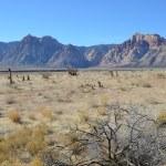 Arizona landscape — Stock Photo #9228761