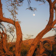 Moonshine Desert In Tree Branch Frame — Stock Photo #9232462