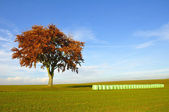 Tree and hay bales — Stock Photo