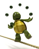 Tortoise juggling on a tight rope — Stock Photo