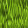 Stock Photo: Lizard skin
