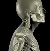 Male skeleton with close up of neck bones — Stock Photo