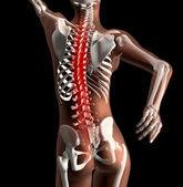 Female medical skeleton with spine highlighted — Stock Photo