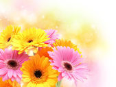 Gerbera daisies on pastel sparkly background — Photo
