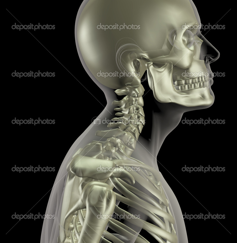 3D render of a male medical skeleton with a close up of the neck bones — Stock Photo #9310523