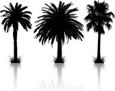 Palm tree silhouettes — 图库照片