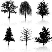 Tree silhouettes — Stock Photo