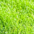 Green grass texture close up — Stock Photo #10045445