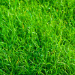 Green grass texture close up — Stock Photo #10045450