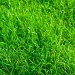 Green grass texture close up — Stock Photo
