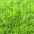 Green grass texture close up — Stock Photo #10045514