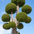 Fancy shaped decorative tree - Stock Photo