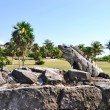 Tulum ruins — Stock Photo #10354837