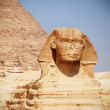 Sphinx — Stock Photo #10520590