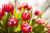 Bouquet of tulips — Stock fotografie