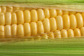 Corn with green leaf — Stock Photo