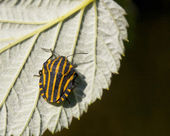 甲壳虫 — 图库照片
