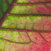 Leaf on green and red — Stock Photo
