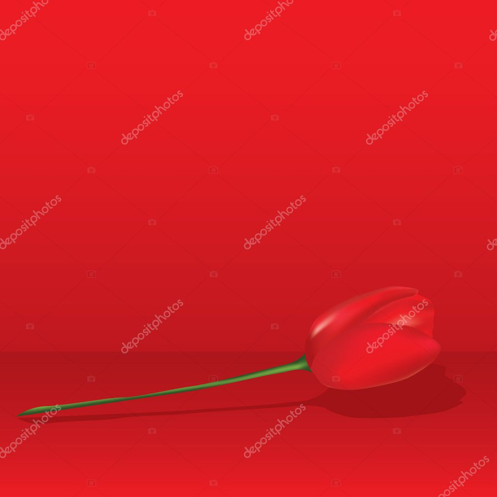 Red tulip. Vector illustartion  Stock Vector #8619057