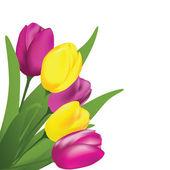 Spring tulips — Stock Vector