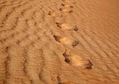 Stappen in de woestijn — Stockfoto