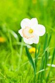 Beautiful flower — Stockfoto