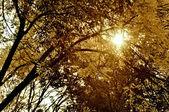 Rayos solares a través de los árboles en septiembre — Foto de Stock