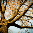 Tree in park — Stock Photo