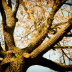 Tree in park — Stock Photo