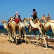 Camel riders on the Red Sea beach — Foto de Stock