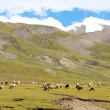 Landscape in Tibet — Stockfoto