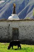 西藏风景 — 图库照片