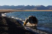 Krajina na břehu jezera — Stock fotografie